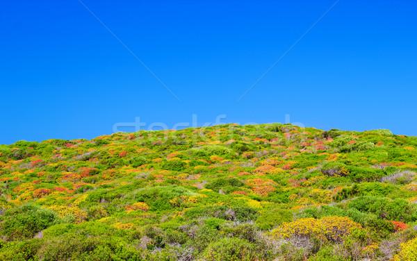 Coloré nain arbuste île ciel bleu Photo stock © tuulijumala