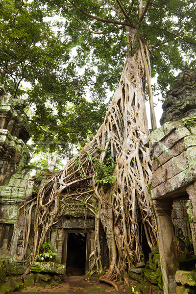 Ancient Ta Prohm or Rajavihara Temple  at Angkor, Siem Reap, Cam Stock photo © tuulijumala