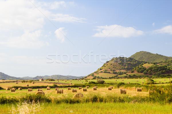 Menorca island landscape with farmland and green hills in sunny  Stock photo © tuulijumala