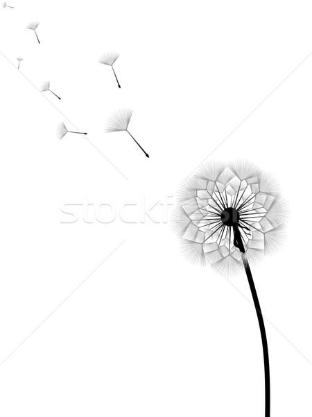 Foto stock: Dandelion · voador · sementes · isolado · branco · flor