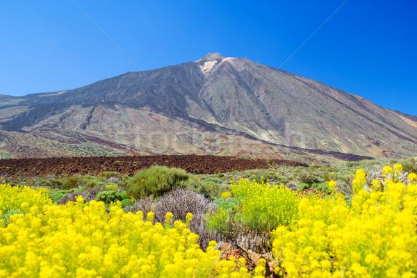 Vulkán csúcs sárga virágok előtér Tenerife sziget Stock fotó © tuulijumala