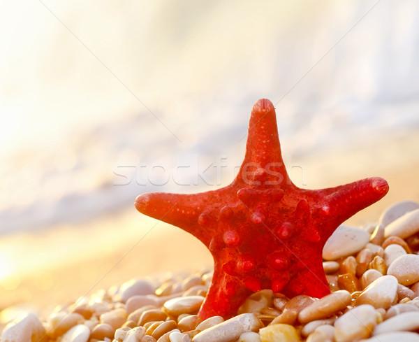 Denizyıldızı plaj doğa deniz güzellik turuncu Stok fotoğraf © tycoon