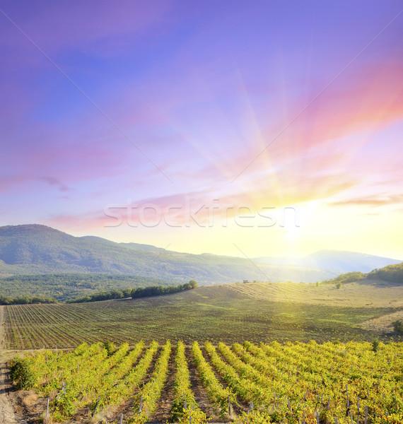 Сток-фото: виноградник · солнце · области · листьев · красный · цвета