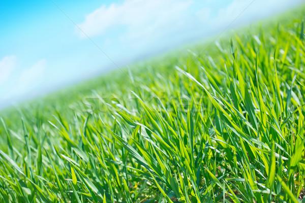 field Stock photo © tycoon