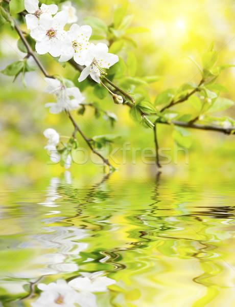 весенние цветы цветок весны природы лист красоту Сток-фото © tycoon