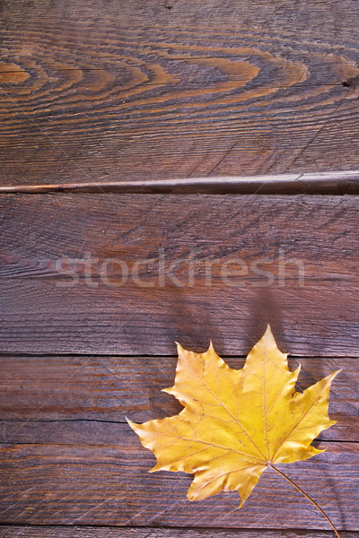 autumn background Stock photo © tycoon