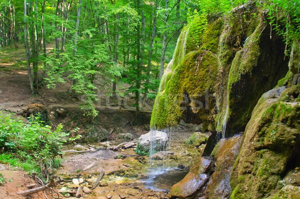 Waterval bos voorjaar water boom achtergrond Stockfoto © tycoon
