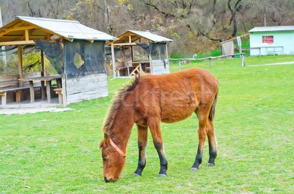 horse Stock photo © tycoon