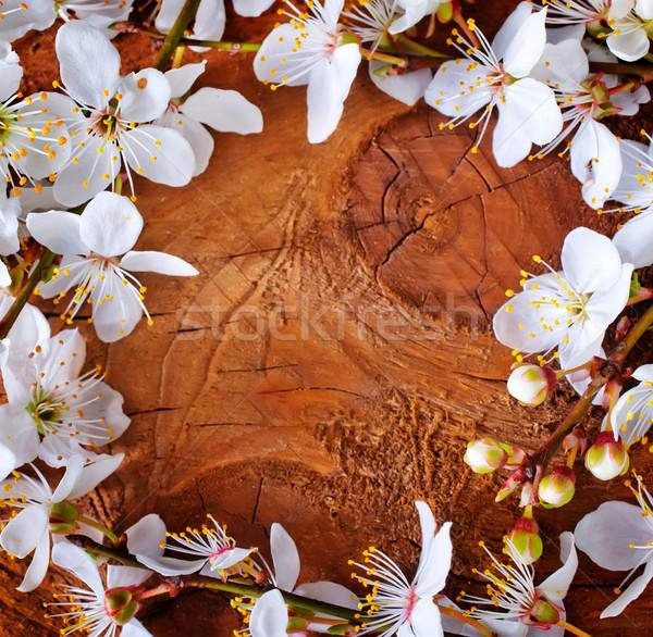 Fondo Pascua primavera naturaleza hoja marco Foto stock © tycoon