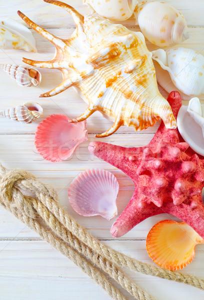 Conchiglie legno design sabbia cavo shell Foto d'archivio © tycoon