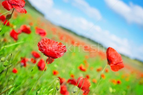 ストックフォト: ケシ · フィールド · 空 · 自然 · ファーム · 赤