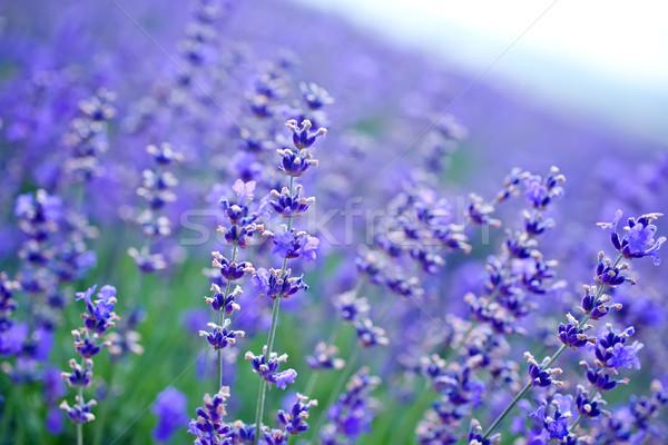 nature in Crimea Stock photo © tycoon
