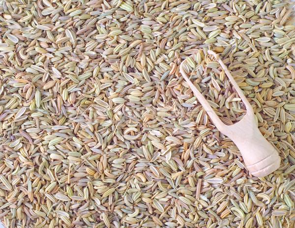 Funcho fruto verde retro cor cozinhar Foto stock © tycoon