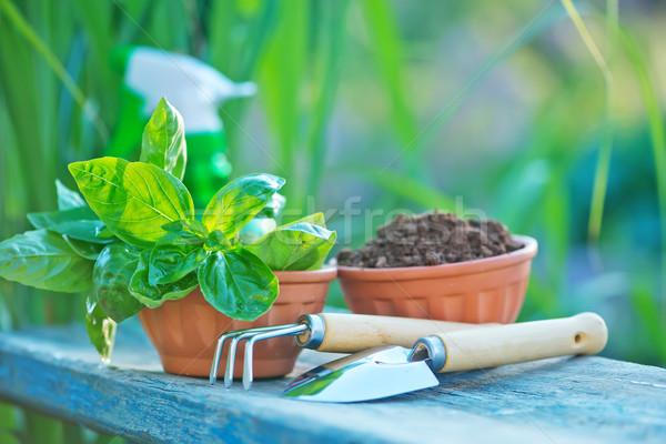 ガーデニング 器具 表 庭園 木材 作業 ストックフォト © tycoon