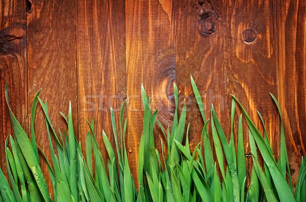зеленая трава весны трава стены листьев Сток-фото © tycoon