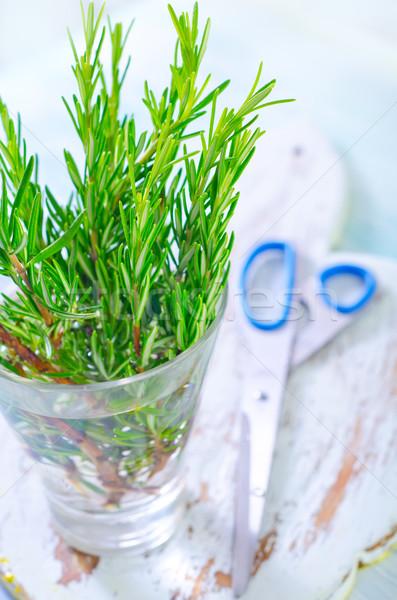 Rozmaring étel fű levél kert csoport Stock fotó © tycoon