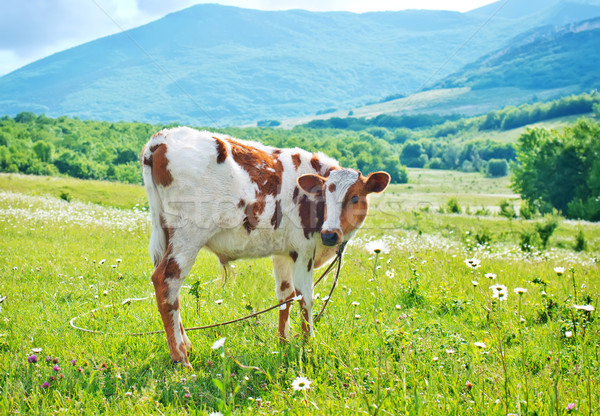 Mező fű tájkép anya zöld farm Stock fotó © tycoon