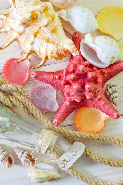 Kagylók fa terv homok kábel kő Stock fotó © tycoon
