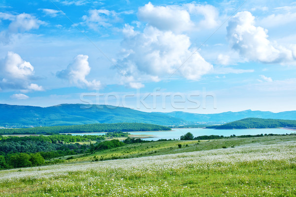 camomile field Stock photo © tycoon