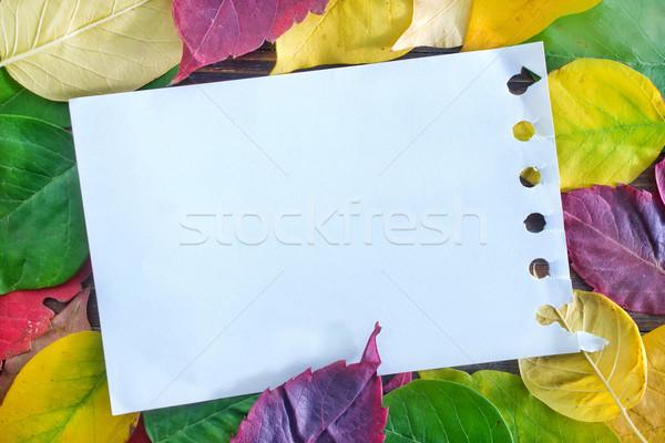 automn background Stock photo © tycoon