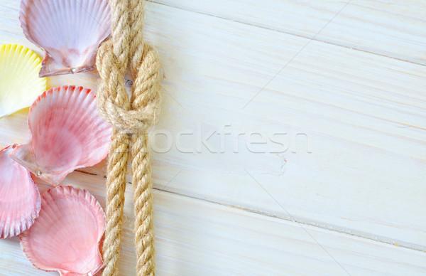 shells Stock photo © tycoon