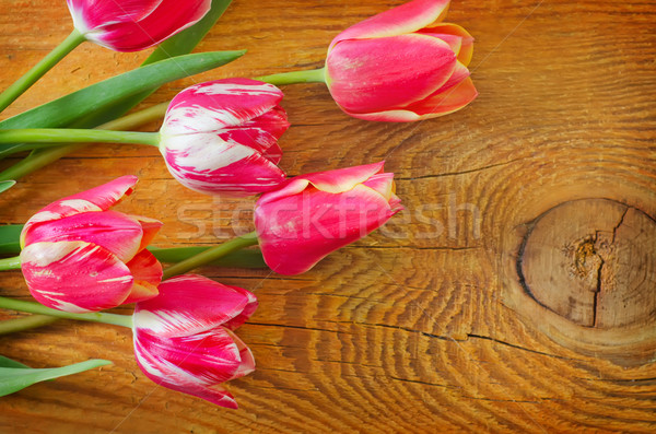Tulips Foto stock © tycoon