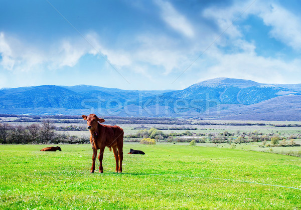 rural landscape Stock photo © tycoon
