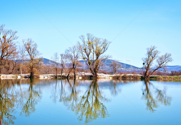природы озеро воды дерево трава лес Сток-фото © tycoon