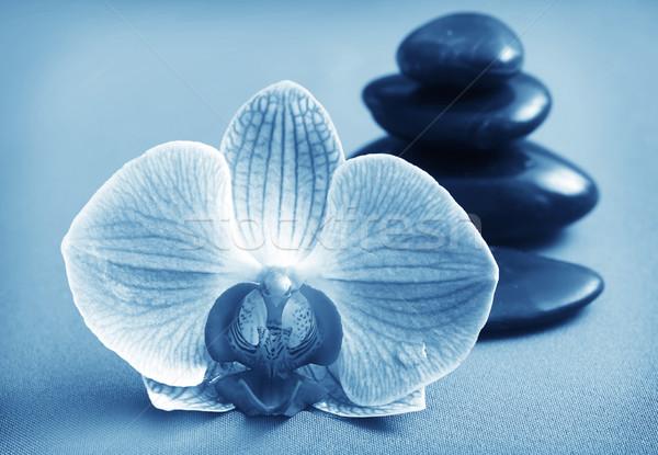 Orkide siyah bazalt spa yeşil sağlık Stok fotoğraf © tycoon