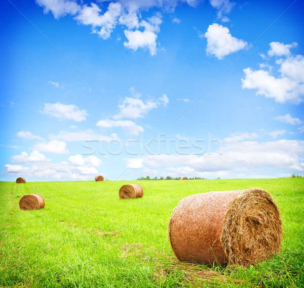 haystack Stock photo © tycoon