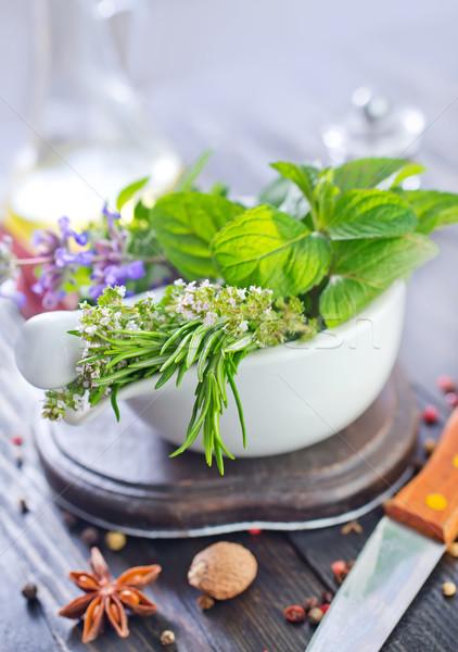 Kruid aroma Spice blad donkere plant Stockfoto © tycoon