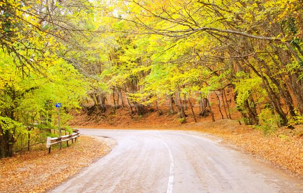 Road in the autumn fores, Crimea road Stock photo © tycoon