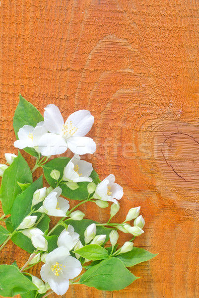 jasmin on wooden background Stock photo © tycoon