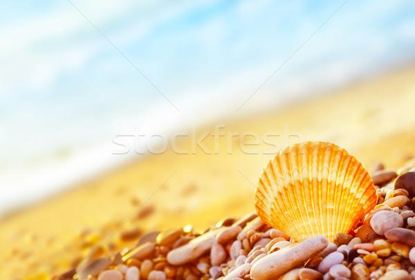 Powłoki plaży niebo charakter lata przestrzeni Zdjęcia stock © tycoon