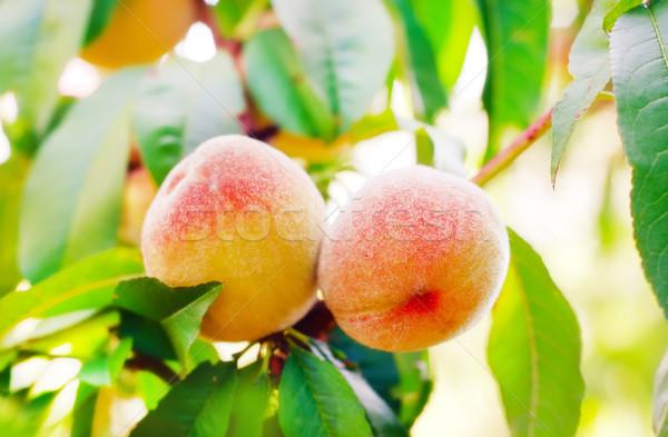 şeftali ağaç doğa sağlık turuncu yeşil Stok fotoğraf © tycoon