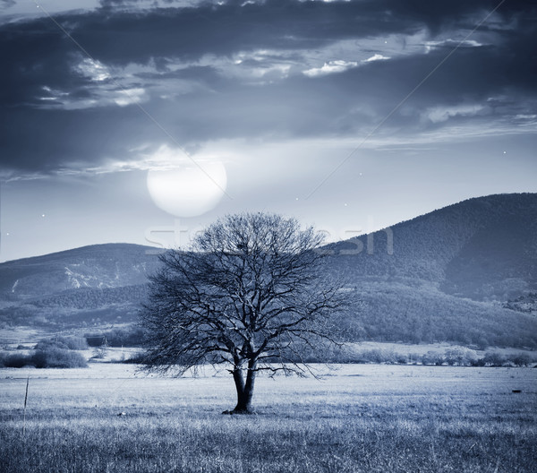One tree and full moon Stock photo © tycoon