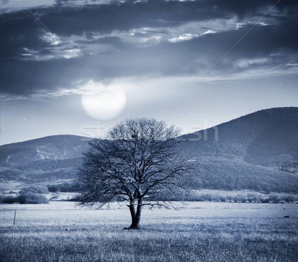 Une arbre pleine lune ciel bois étoiles Photo stock © tycoon