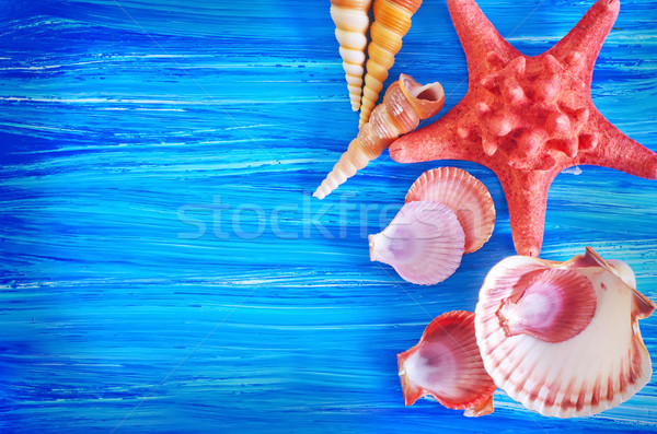 sea shells on blue board Stock photo © tycoon