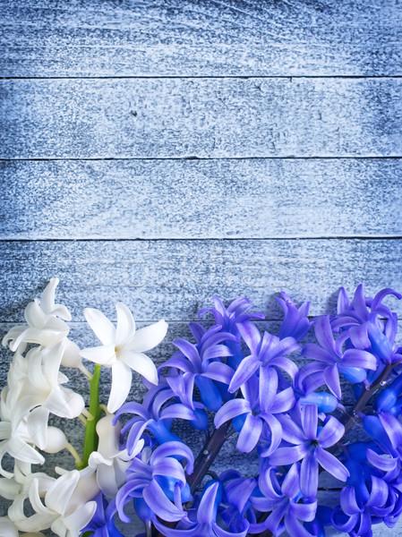 çiçekler bahar doğa güzellik yaz bitki Stok fotoğraf © tycoon