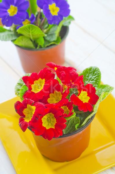 Flor natureza laranja preto cores rosa Foto stock © tycoon