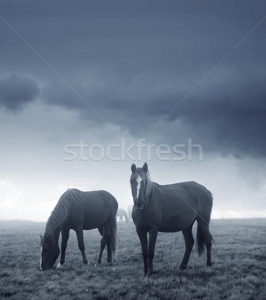 horses Stock photo © tycoon