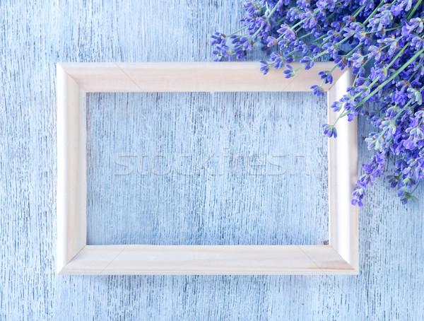 lavender Stock photo © tycoon