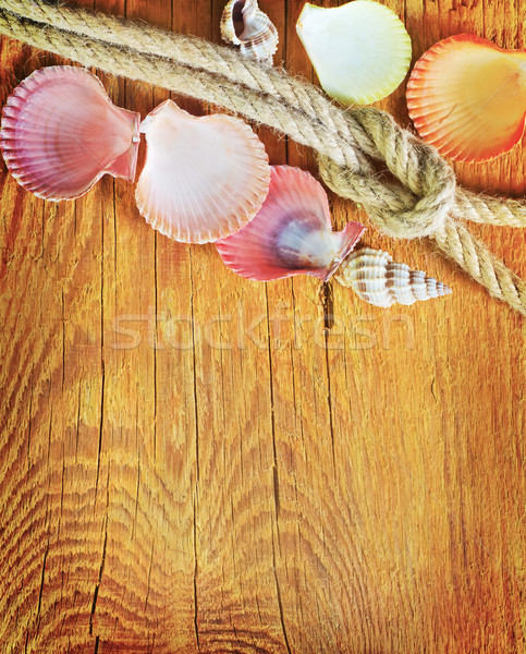 shells on wooden background Stock photo © tycoon