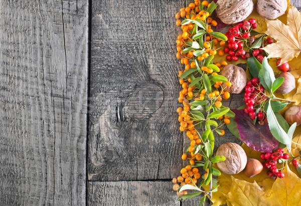 autumn background Stock photo © tycoon
