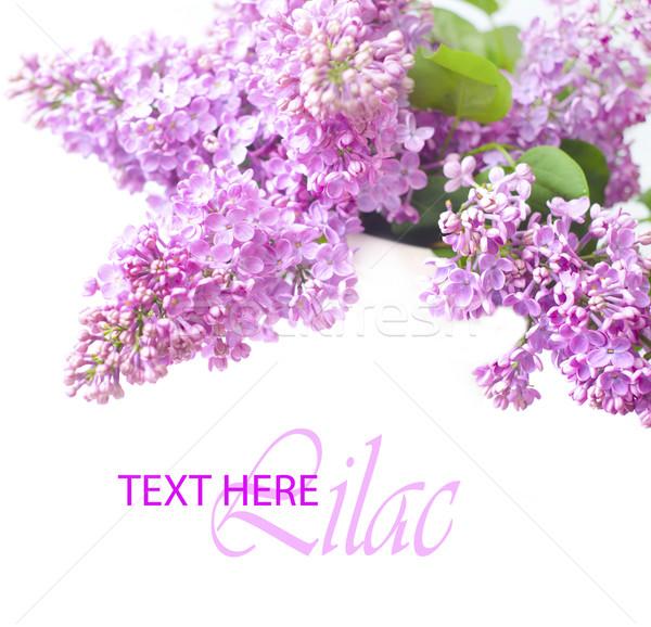 Orgona virág fa természet nyár űr Stock fotó © tycoon