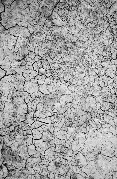 Surface of a grungy dry cracking parched earth Stock photo © tycoon