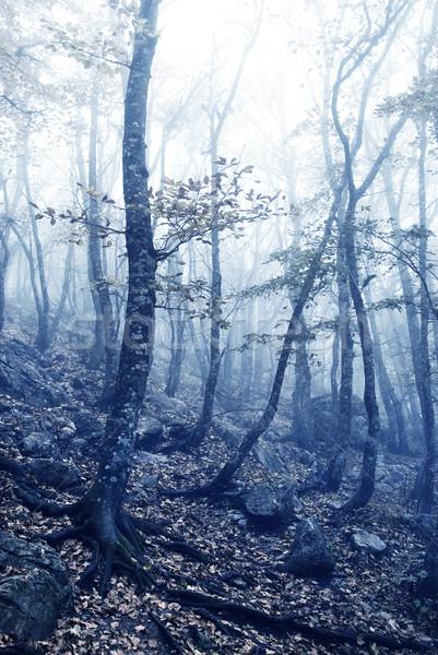 Photo stock: Brouillard · forêt · soleil · nature · lumière · feuille