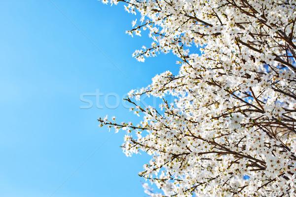 春 ツリー 自然 庭園 芸術 にログイン ストックフォト © tycoon