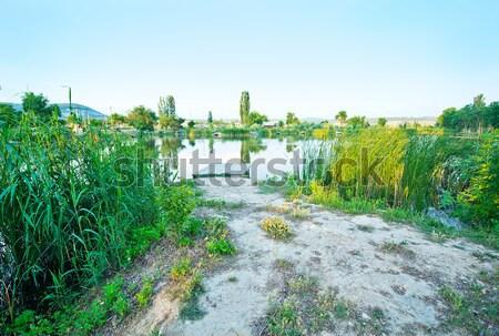湖 空 光 庭園 夏 緑 ストックフォト © tycoon