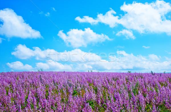 Fiori campo cielo verde viaggio colore Foto d'archivio © tycoon